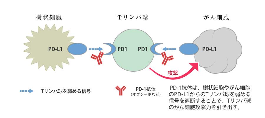 剤 阻害 免疫 ポイント チェック